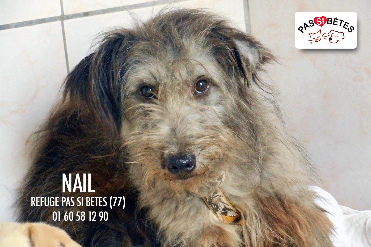 NAIL - x griffon 6 ans - Refuge Pas si Betes à Cutrelles (77) Psbnail